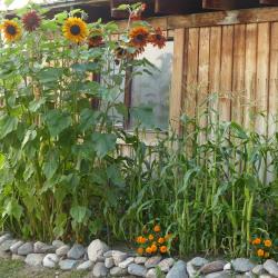 Backyard Hobby Farmer