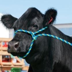 Cattle Supplies