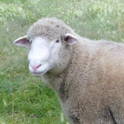 Sheep Goat Llama Supplies